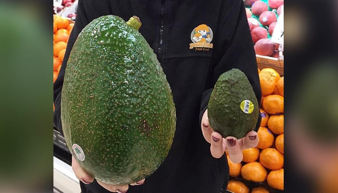 avozilla - photo #13